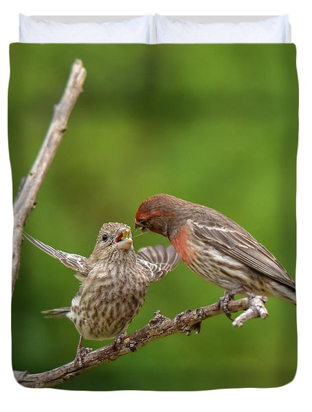 Finch Feeding Time I Duvet Cover