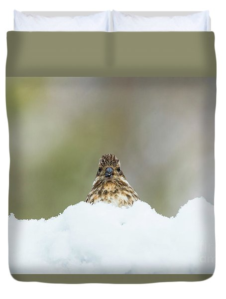 Female Purple Finch Duvet Cover