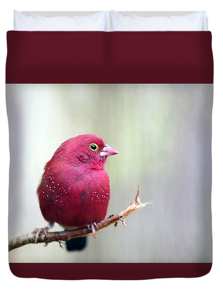 Fire Finch Duvet Cover