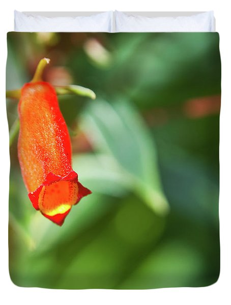 Firecracker Blossom Duvet Cover by Douglas Barnett