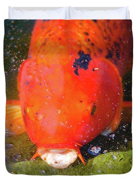 Fish Surprise Duvet Cover