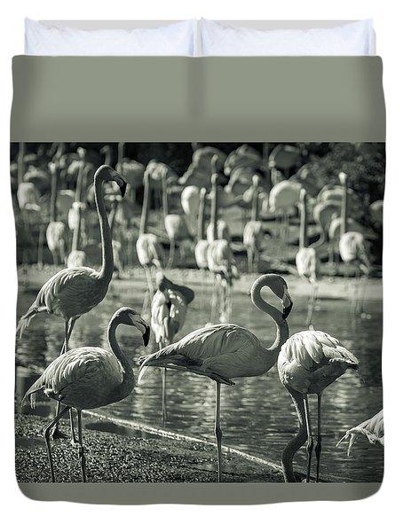Flamboyance Of Flamingos Duvet Cover