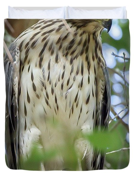 Fledgling Red-shouldered Hawk 2 Duvet Cover