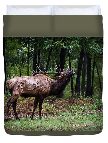 Duvet Cover featuring the photograph Flehmen Response by Andrea Silies
