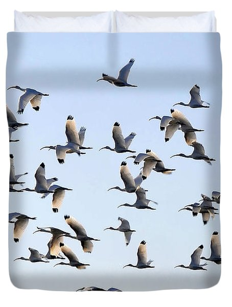 Flight Of The White Ibis Duvet Cover by David Lee Thompson