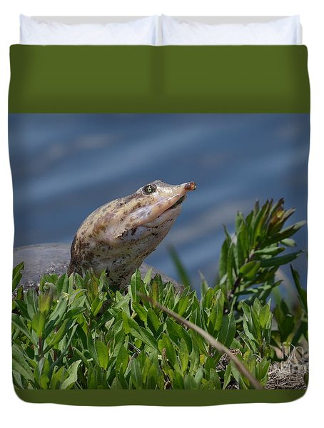 Florida Softshell In Georgia Duvet Cover