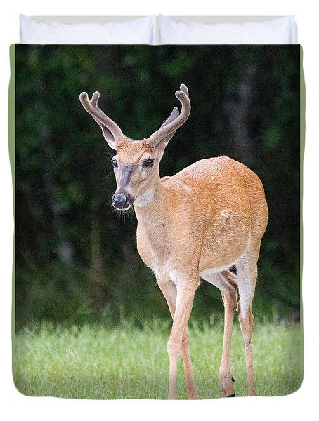 Florida Whitetail Buck Deer With Velvet Duvet Cover