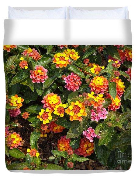 Flower Explosion Duvet Cover by Erick Schmidt