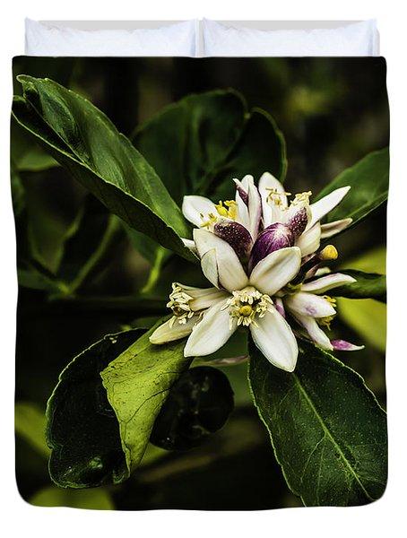 Flower Of The Lemon Tree Duvet Cover