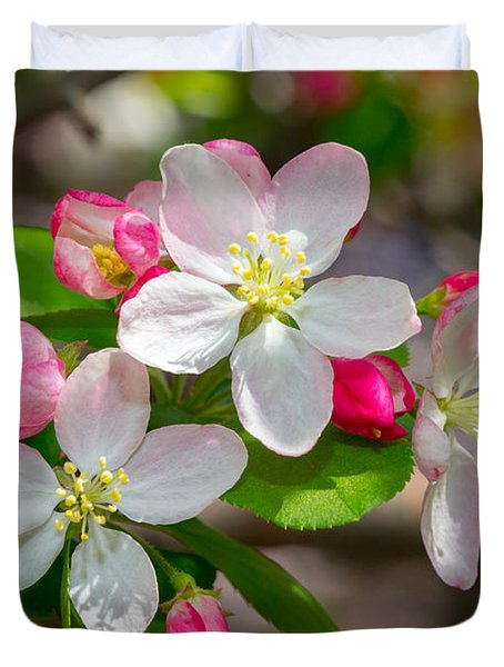 Flowering Cherry Tree Blossoms Duvet Cover