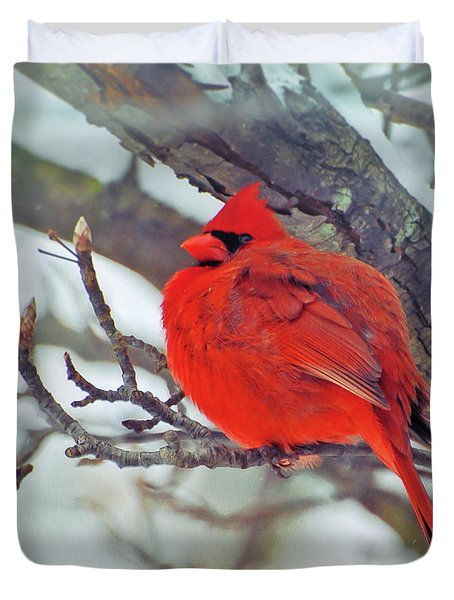 Fluffed Up Male Cardinal Duvet Cover