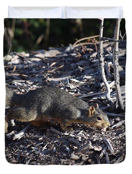 Squirrel Pprh Woodland Park Co Duvet Cover
