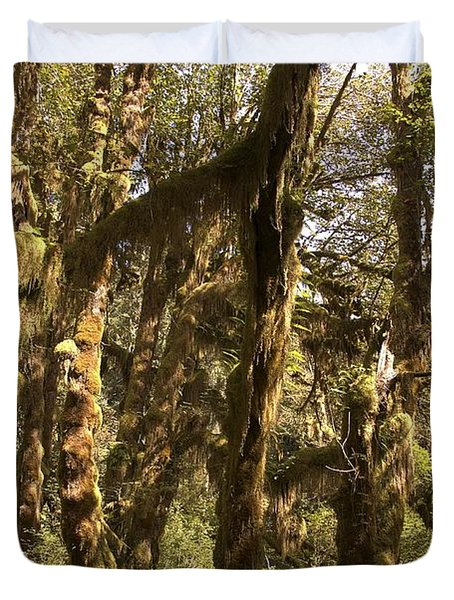 Forest Setting In Hoh Rain Forest Duvet Cover