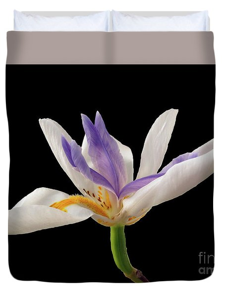 Fortnight Lily On Black Duvet Cover