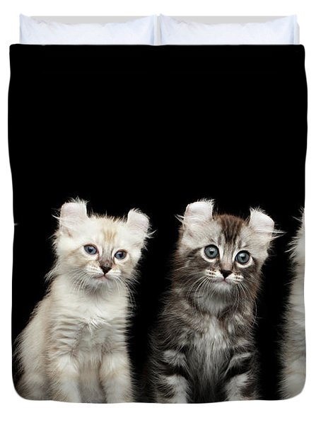 Four American Curl Kittens With Twisted Ears Isolated Black Background Duvet Cover