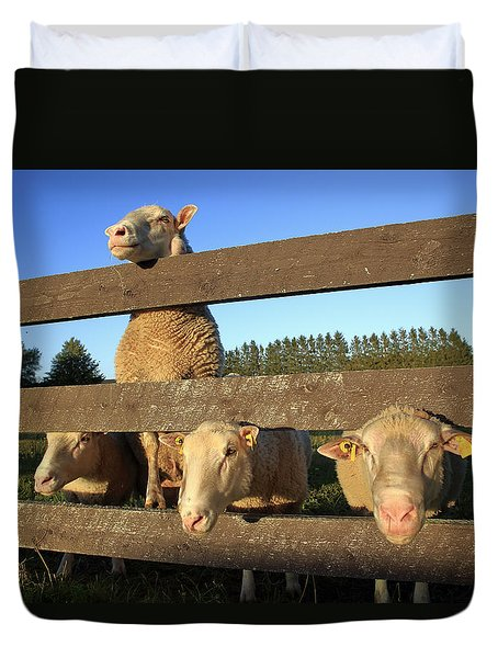 Four Sheep At A Fence Duvet Cover
