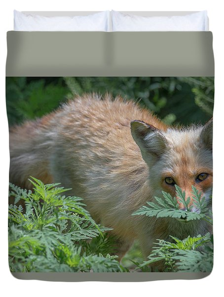 Fox In The Ferns Duvet Cover