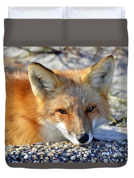 Fox Posing For Me Duvet Cover