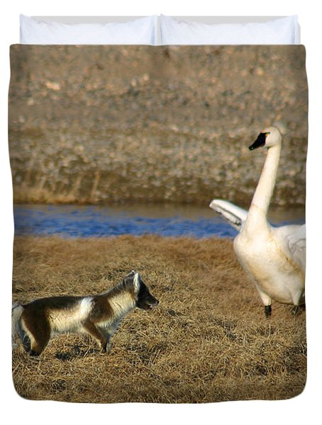Fox Vs Tundra Swan Duvet Cover