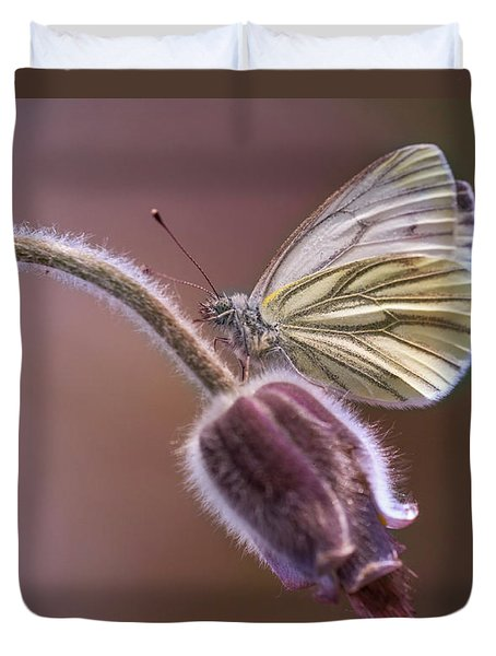 Fresh Pasque Flower And White Butterfly Duvet Cover by Jaroslaw Blaminsky