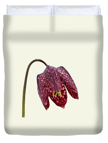 Fritillaria Meleagris Cream Background Duvet Cover