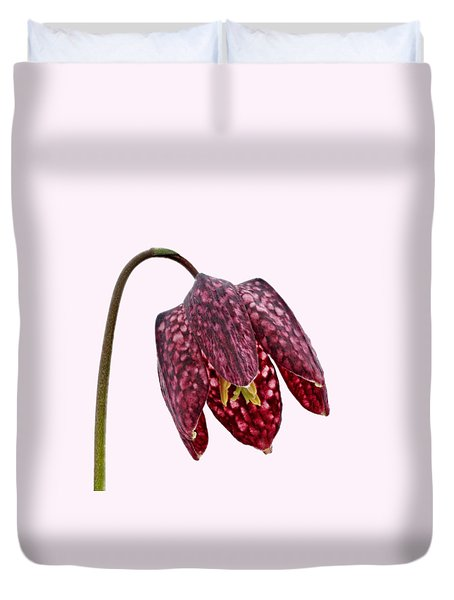 Duvet Cover featuring the photograph Fritillaria Meleagris Transparent Background by Paul Gulliver