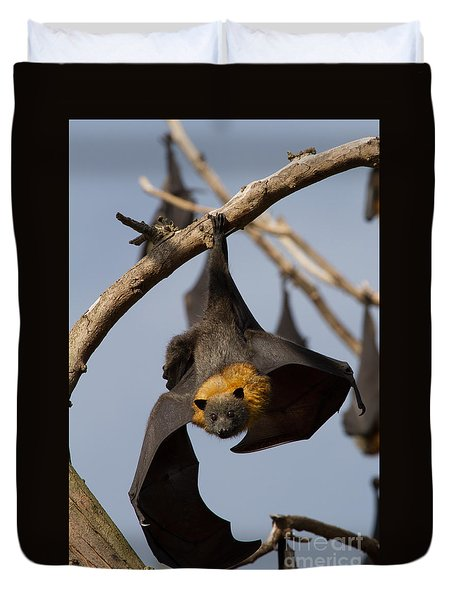 Fruit Bat Hanging Duvet Cover