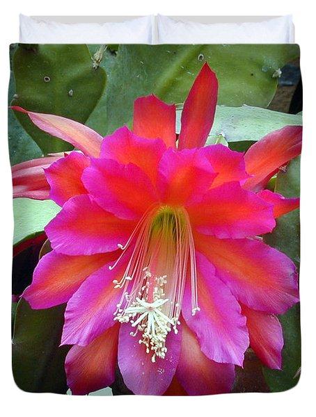 Fuchia Cactus Flower Duvet Cover by Douglas Barnett