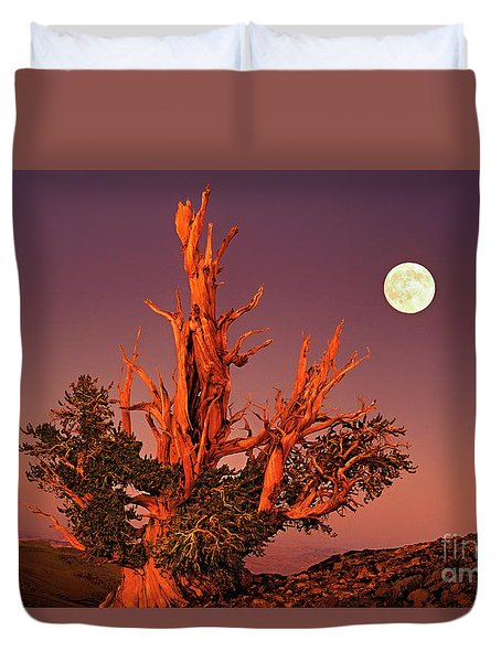 Duvet Cover featuring the photograph Full Moon Behind Ancient Bristlecone Pine White Mountains California by Dave Welling