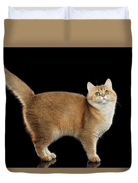 Funny British Cat Golden Color Of Fur Duvet Cover