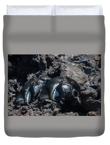 Galapagos Penguins  Bartelome Bartholomew Island Galapagos Islands Duvet Cover