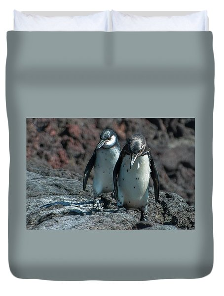 Galapagos Penguins  Bartelome Island Galapagos Islands Duvet Cover