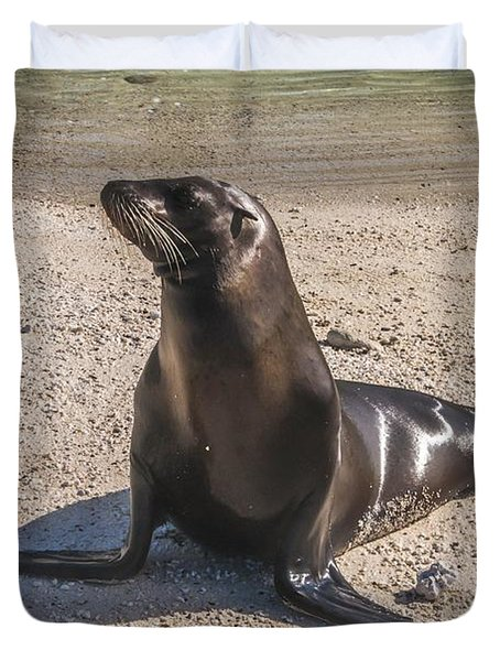 Galapagos Sea Lion Duvet Cover