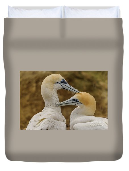 Gannets 4 Duvet Cover by Werner Padarin