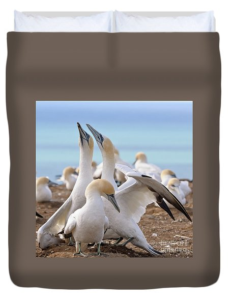 Duvet Cover featuring the photograph Gannets by Werner Padarin