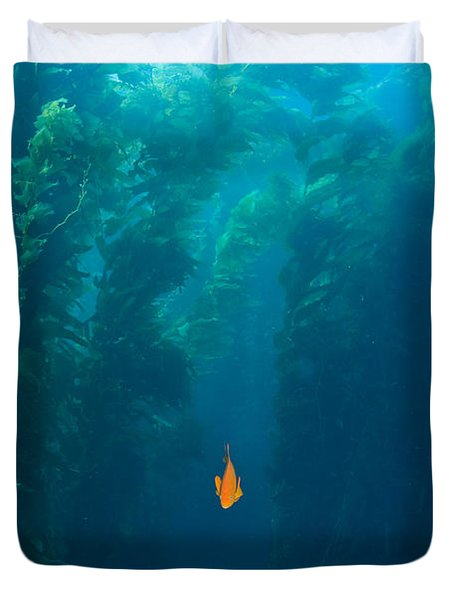 Garibaldi Fish In Giant Kelp Underwater Duvet Cover by James Forte