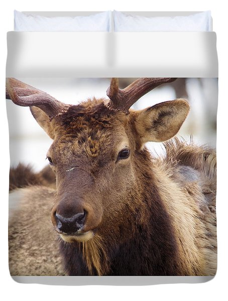 Duvet Cover featuring the photograph Gaze From A Bull Elk by Jeff Swan