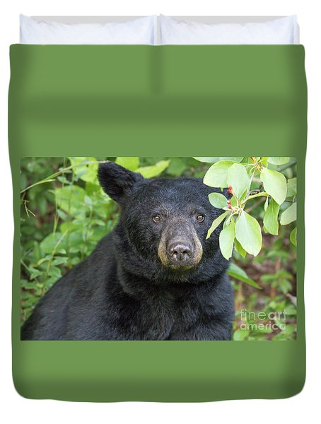 Gazing Black Bear Duvet Cover