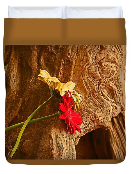 Gerber Daisy On Driftwod Duvet Cover by Ronald Olivier