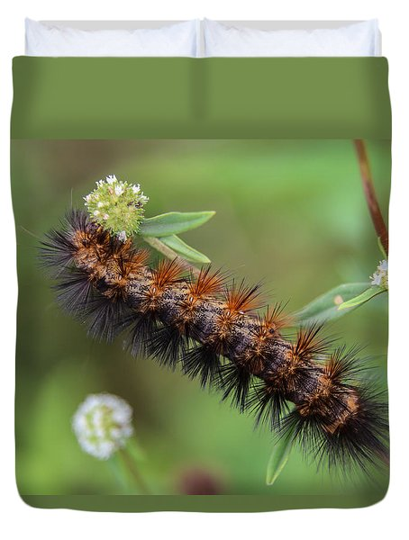 Giant Leopard Moth Caterpillar Duvet Cover