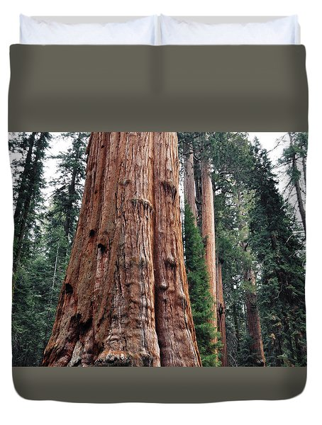 Duvet Cover featuring the photograph Giant Sequoia II by Kyle Hanson