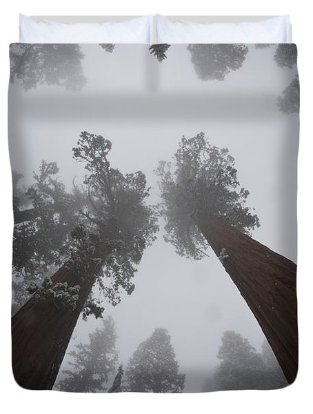 Giant Sequoias Duvet Cover by Gregory G. Dimijian, M.D.