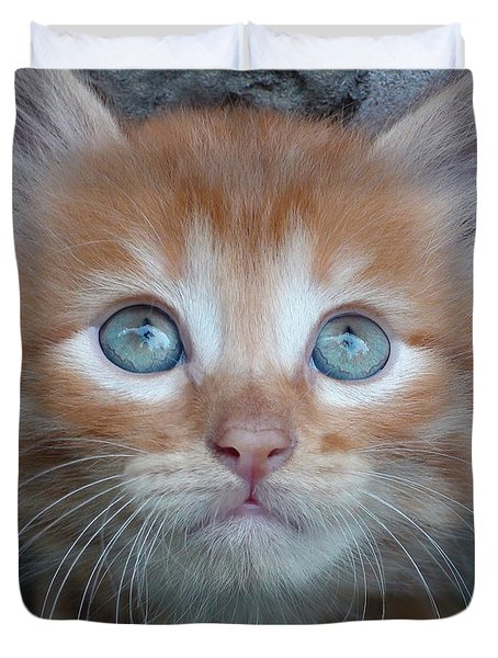 Ginger Kitten With Blue Eyes Duvet Cover by Sergey Lukashin