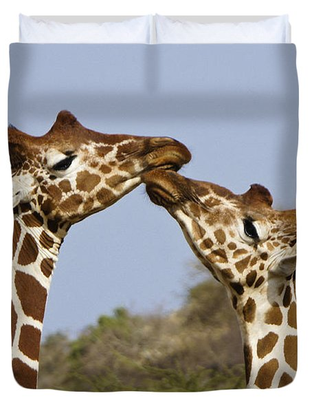 Giraffe Kisses Duvet Cover by Michele Burgess