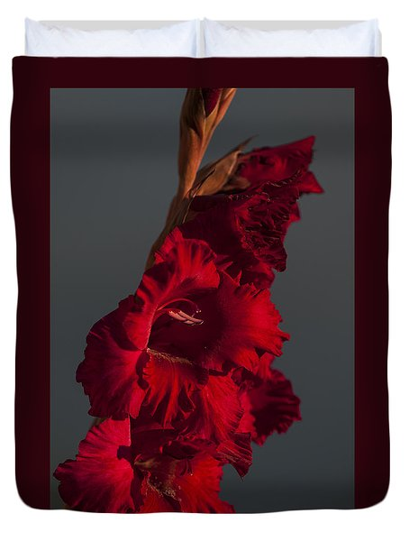 Gladiolus Against A Dark Cloud Duvet Cover