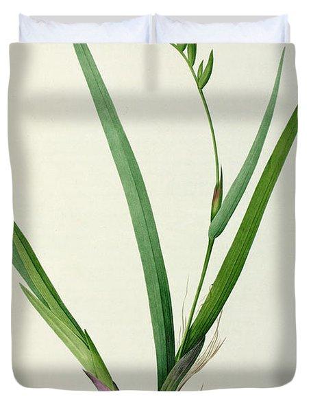 Gladiolus Cardinalis Duvet Cover