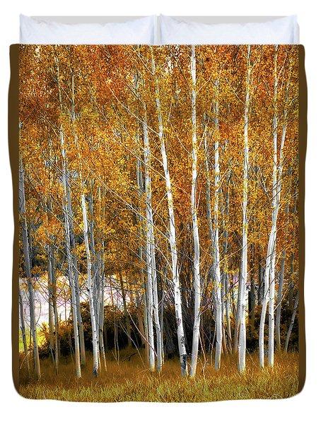 Gleaming Fall Aspens Duvet Cover