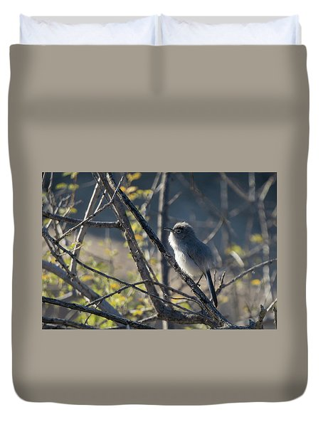 Gnatcatcher Duvet Cover
