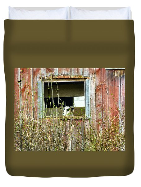 Goat In The Window Duvet Cover by Donald C Morgan