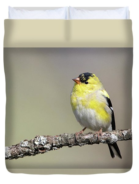 Gold Finch Duvet Cover